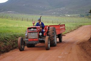 Tractor, Massey - Ferguson, Art By Bruce, Art for sale